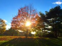 Gloeiende Bomen Royalty-vrije Stock Afbeeldingen