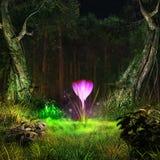 Gloeiende krokus in een midden van het bos Royalty-vrije Stock Foto's