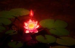 Gloeiende lotusbloem Royalty-vrije Stock Afbeeldingen