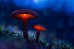 Gloeiende paddestoelen in een feebos de magische wereld van paddestoel stock afbeeldingen