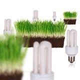 Gloeilamp in groen ecologisch concept Stock Foto