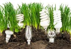 Gloeilampen, energy-saving lampen, gras en aarde Stock Afbeeldingen