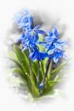 Gloire des fleurs de neige Image libre de droits