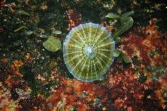Gloire sous-marine Photo stock