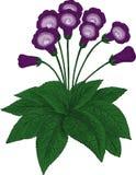 Gloksynia kwiat. Wektor Zdjęcie Stock
