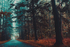 Gloomy autumn forest , depression , leaves Stock Image