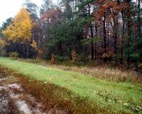 Gloomy autumn forest Stock Image