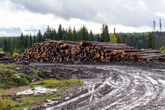 Gloomy autumn landscape. Wet dirt road, warehouse of felled tree Stock Photos