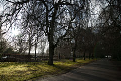 Gloomy boulevard of willows against direct sunlight Stock Images