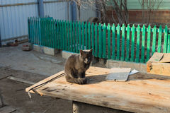 Gloomy cat sitting on a wooden table. Green fence stock photos