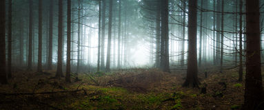 Gloomy and dark forest Royalty Free Stock Photography