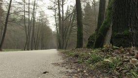 Gloomy day in national park Maninska Tiesnava, Slovakia. stock video