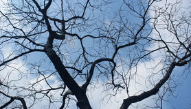 Gloomy dead tree. With sky background Royalty Free Stock Images