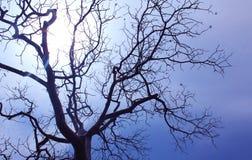 Gloomy dead tree Stock Photo
