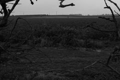 Gloomy Field. Black and white picture took of a field hidden be-hide some trees Royalty Free Stock Image