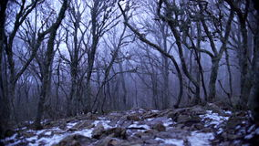 Gloomy foggy forest with fallen leaves and snow stock video