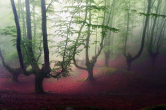 Gloomy forest Stock Photography