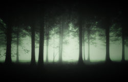 Gloomy forest with fog Stock Photography