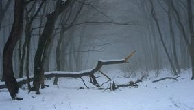 Gloomy forest. This is gloomy morning in Caucasus forest in winter Stock Images