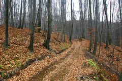Gloomy forest road in late autumn. Gloomy autumn muddy forest road Royalty Free Stock Images