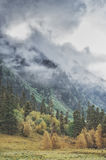 Gloomy landscape with mountains in clouds and forest Royalty Free Stock Photo