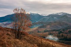 Gloomy late autumn scenery. Tree in red foliage on hillside. distant mountain with snowy top. village down in the valley. gloomy late autumn scenery stock photos