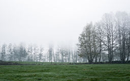 Gloomy morning on a meadow Stock Photography