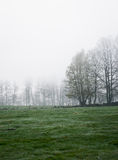 Gloomy morning on a meadow Royalty Free Stock Image