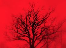 Gloomy oak in red mist. A gloomy silhouette of a bare oak tree in red mist. Soft focus filter Royalty Free Stock Photo