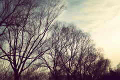 Gloomy Oak in Winter Royalty Free Stock Photos