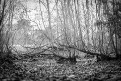 Gloomy Pond Stock Image