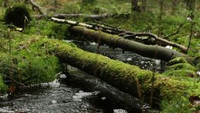 Gloomy rainforest stream in the foreground. Gloomy rainforest, fallen trees, stream in the foreground with sound stock footage