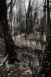 Gloomy river Stock Photography