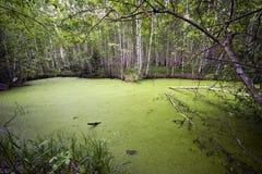 Gloomy spring lake Royalty Free Stock Image
