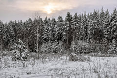 Gloomy sunset in winter field Royalty Free Stock Photo