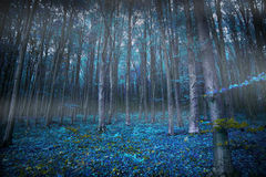 Gloomy surreal woods with lights and blue vegetation, magic fair. Ytale scene forest Royalty Free Stock Photos