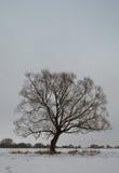 Gloomy tree. Against a gray sky Stock Image