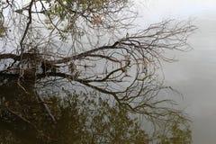 Gloomy treefall at Wascana Lake Regina Saskatchewan. Gloomy scene at Wascana Lake Regina Saskatchewan Royalty Free Stock Photos