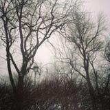Gloomy trees against cloudy sky Stock Photo