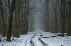 Gloomy way. This is gloomy ride in Caucasus forest in winter royalty free stock image