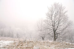 Gloomy winter day Stock Images
