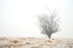 Gloomy winter day Stock Photography