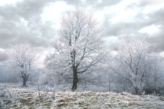 Gloomy winter day Royalty Free Stock Image