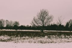 Gloomy winter landscape in canada. copy space available stock images