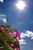 Gloria de mañana Imagen de archivo libre de regalías