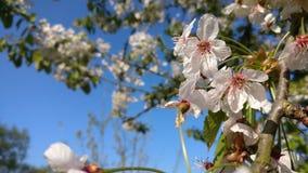 Gloria del fiore di Flowertree immagini stock libere da diritti