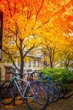 Gloria di autunno Fotografia Stock Libera da Diritti