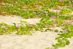 Gloria di mattina sulla sabbia Immagine Stock