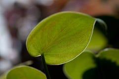 Gloria verde Foto de archivo libre de regalías