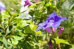 Glorie di Moring in natura Fotografie Stock